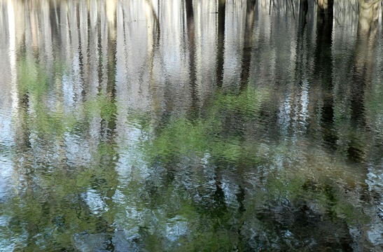 Kim Manley Ort Photography - Tree Reflections