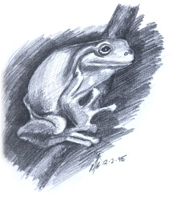 Frog by Gumnut Logic