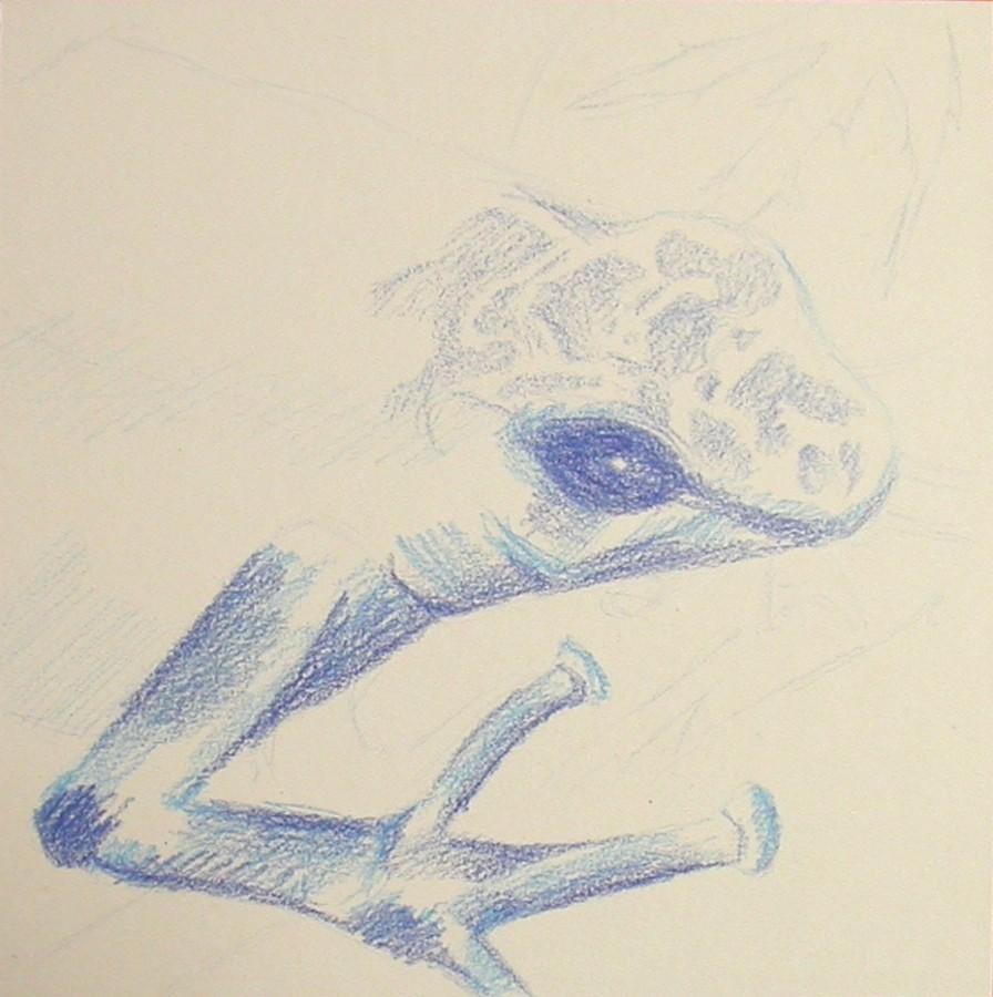 Blue frog – wip1