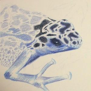 Blue frog - wip2