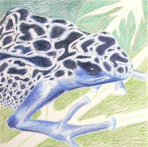 Blue frog - wip3