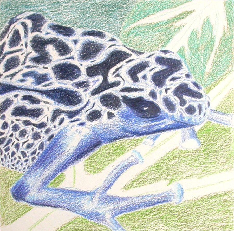 Blue frog – wip3