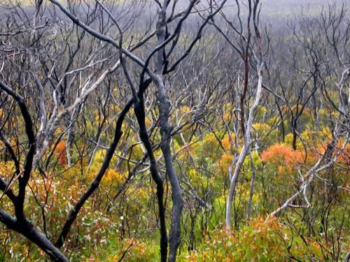 Rejuvenating forest - Port Lincoln National Park