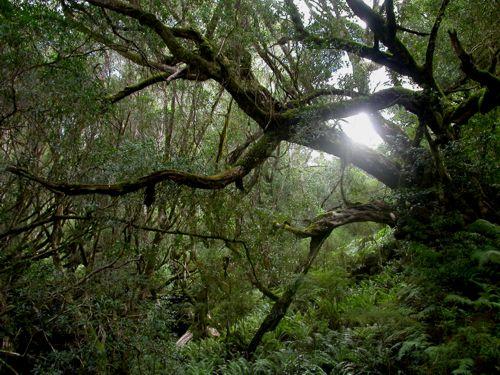 Tree - Eastern Victoria, Australia