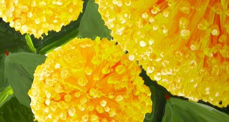 Wreath wattle