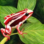 Phantasmal poison dart frog final