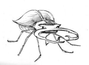 Stag beetle 3