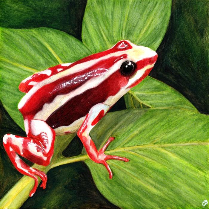 Phantasmal poison dart frog