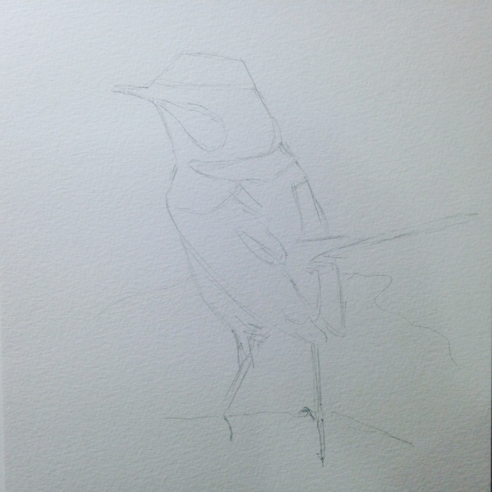 wren pencil outline