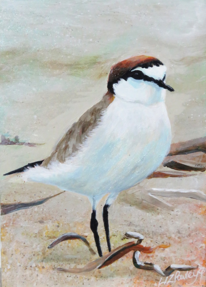 Red- capped Plover painting by Liz Powley